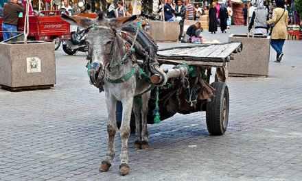 Marrakech: En introduksjon