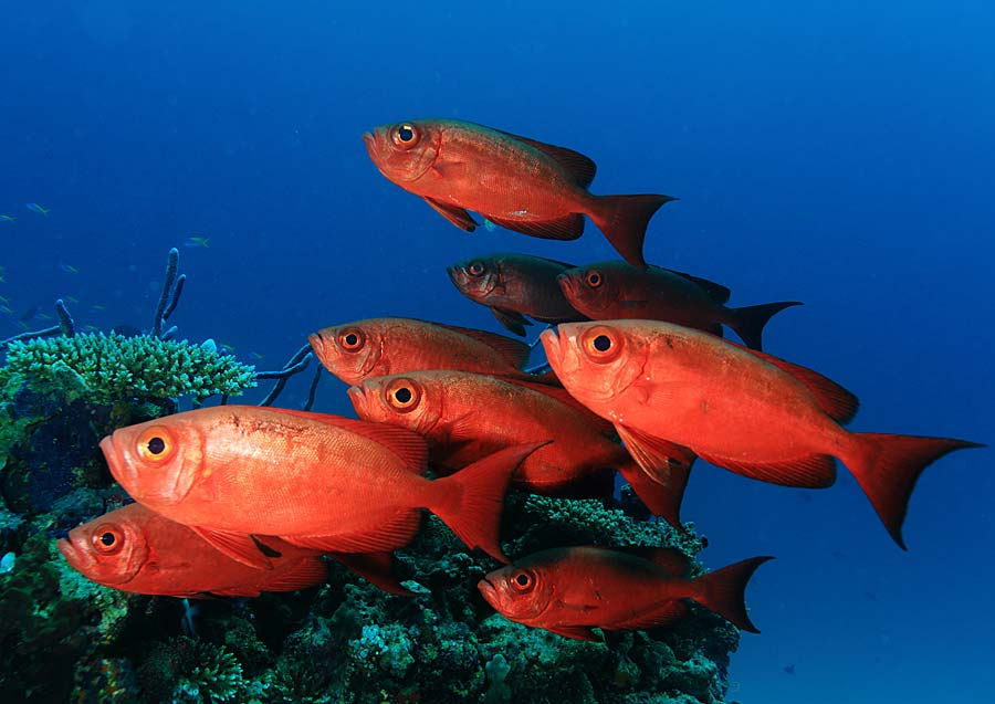 Dykking i Maldivene