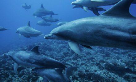 Å svømme med delfiner