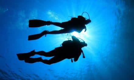 Dykking på Zanzibar, hører du hvalene?