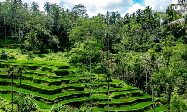 Opplev magiske Ubud, Bali