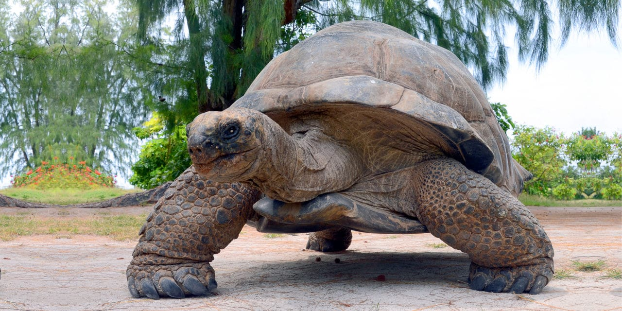 Sexy kjempeskilpadder på Seychellene